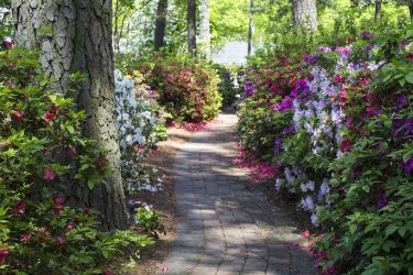 We Assist Commercial Landscaping