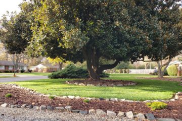 Yard of the Month - Dec. 2020