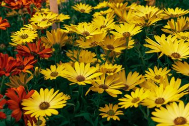 Large Selection of Annuals